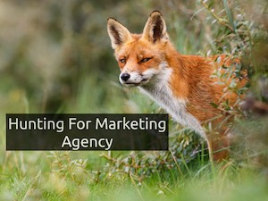 Hunting For Marketing Agency